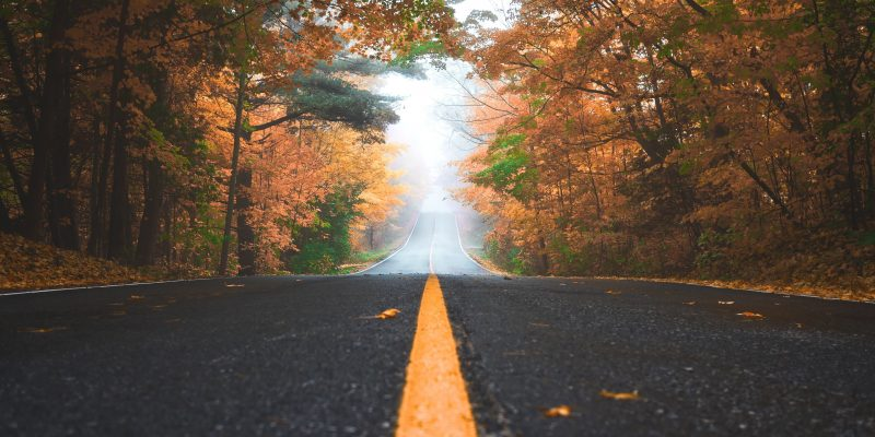 An image of a road fading into the distance in autumn
